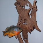wallfish.jpg